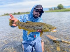 MADISONRIVERBROWNTROUT13