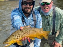 MADISONRIVERBROWNTROUT7