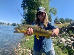 YELLOWSTONERIVERBROWNTROUT1